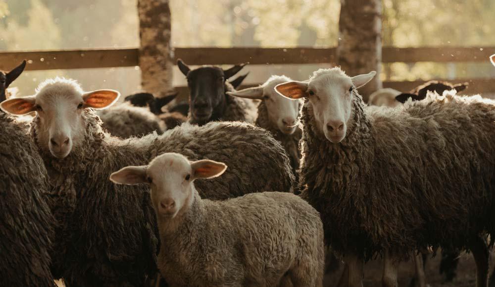Les BTSA ACSE en formation sur la pratique du pastoralisme en élevage ovin viande